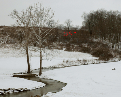nina-snow2.jpg